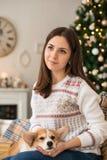 Ragazza in maglione bianco che segna il cardigan del Corgi di Lingua gallese del cucciolo immagine stock