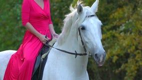 Ragazza nel cavallo bianco rosso di guida del vestito contro il sole Cavaliere della donna con il suo stallone nella foresta di a archivi video