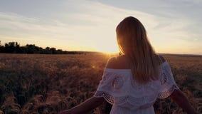 Ragazza romantica in un vestito bianco che cammina nei giacimenti di grano dorati al sole Fotografia Stock