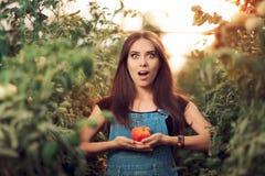 Ragazza sorpresa dell'azienda agricola che tiene un pomodoro dentro una serra Fotografie Stock Libere da Diritti