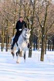 Ragazza sul cavallo di dressage in inverno immagine stock