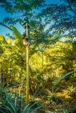 Ragazza sull'albero in Bolivia Immagini Stock Libere da Diritti
