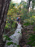 Ragazza sull'albero caduto Fotografia Stock