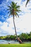 Ragazza sulla palma Immagini Stock Libere da Diritti
