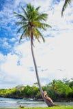 Ragazza sulla palma Immagine Stock