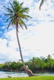 Ragazza sulla palma Fotografie Stock
