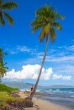 Ragazza sulla palma Fotografia Stock Libera da Diritti