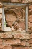 Ragazza in una casa della roccia. fotografia stock libera da diritti