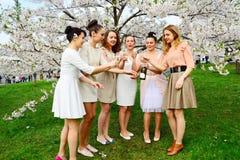Ragazze con champagne che celebrano nel giardino di sakura Immagine Stock Libera da Diritti