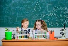 Ragazze sulla lezione di chimica della scuola Compagni di corso della scuola Bambini occupati con l'esperimento Provette con vari immagini stock libere da diritti