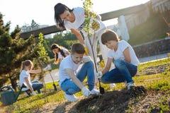 Ragazzi attenti che piantano nuovo albero in parco Fotografia Stock