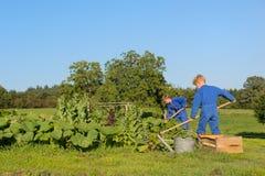 Ragazzi dell'azienda agricola che aiutano nell'orto Immagine Stock