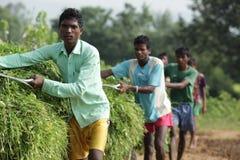 Ragazzi tribali nel lavoro Fotografia Stock Libera da Diritti