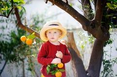 Ragazzino adorabile in cappello di paglia che seleziona mandarino maturo fresco nel giardino soleggiato dell'albero di mandarino  Fotografia Stock
