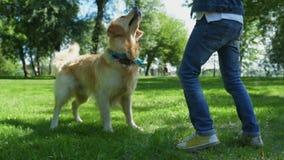 Ragazzino che gioca con il suo cane del purosangue di offerta video d archivio