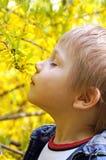 Ragazzino che sente l'odore dei fiori gialli in fiore Fotografia Stock Libera da Diritti
