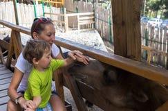Ragazzino e madre nello zoo del contatto Fotografia Stock Libera da Diritti