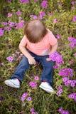 Ragazzino nel prato dei fiori porpora un giorno soleggiato, bambino nel campo dei fiori Fotografia Stock Libera da Diritti