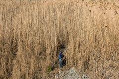 Ragazzino sveglio che cammina nell'erba asciutta alta al giorno nuvoloso di autunno Fotografia Stock Libera da Diritti
