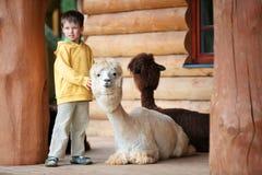 Ragazzino sveglio che gioca con un'alpaga del bambino Fotografie Stock Libere da Diritti