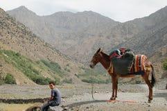 Ragazzo & asino, Imlil, alte montagne di atlante, Marocco Immagini Stock Libere da Diritti