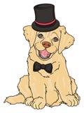 Ragazzo beige del cucciolo Immagine Stock