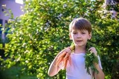 Ragazzo biondo prescolare sveglio del bambino con le carote in giardino domestico Bambino che fa il giardinaggio e che mangia all immagine stock