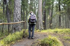 Ragazzo che cammina da solo nella foresta verde Fotografia Stock