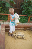 Ragazzo che gioca con il coniglio e la tartaruga in sabbiera Immagini Stock Libere da Diritti