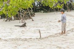 Ragazzo che guarda una lucertola alla spiaggia, Galapagos, Ecuador Fotografie Stock Libere da Diritti