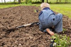 Ragazzo che pianta i camici del giardino Fotografia Stock