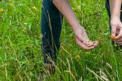 Ragazzo che raccoglie i funghi del marasmius fotografie stock