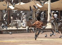 Ragazzo che sparge i piccioni Fotografia Stock