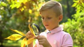 Ragazzo che studia la foglia di autunno con la lente di ingrandimento, interessata all'ecologia, professione futura video d archivio