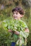 Ragazzo che tiene lattuga organica Fotografia Stock