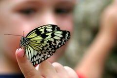 Ragazzo con il fuoco selettivo della farfalla Fotografia Stock Libera da Diritti