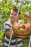 Ragazzo con un canestro delle mele e della scala Immagini Stock Libere da Diritti
