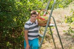Ragazzo con un canestro delle mele e della scala Immagine Stock Libera da Diritti