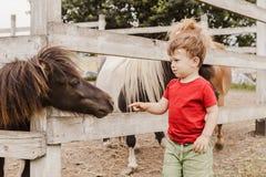 Ragazzo del bambino che indica il suo dito al cavallo del cavallino Immagine Stock Libera da Diritti