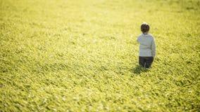 Ragazzo del bambino che sta in mezzo all'alta erba verde Immagine Stock Libera da Diritti