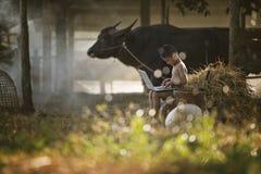 Ragazzo di paese asiatico che gioca computer portatile nel campo e nel bufalo dell'azienda agricola dietro Fotografia Stock
