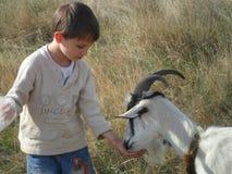 Ragazzo e capra Fotografia Stock Libera da Diritti
