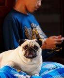 Ragazzo e pug Fotografia Stock