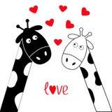 Ragazzo e ragazza bianchi della giraffa del nero sveglio del fumetto Coppie di Camelopard alla data Collo lungo Serie di caratter Immagine Stock