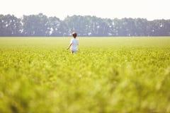 Ragazzo nel campo alla mattina soleggiata di estate Immagini Stock Libere da Diritti