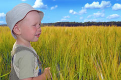 Ragazzo in un giacimento di grano Fotografia Stock