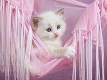ragdoll милого пинка котенка гамака милое стоковое изображение rf
