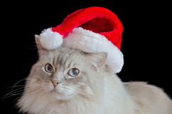 Ragdoll cat with Christmas hat Royalty Free Stock Photos