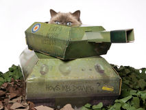 Ragdoll cat peeping out of mini army tank. Cute cat peeping out of green miniature army tank, on white background Royalty Free Stock Photography