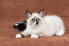 Ragdoll kitten with camera lens. Ragdoll kitten on brown suede with camera lens Royalty Free Stock Image